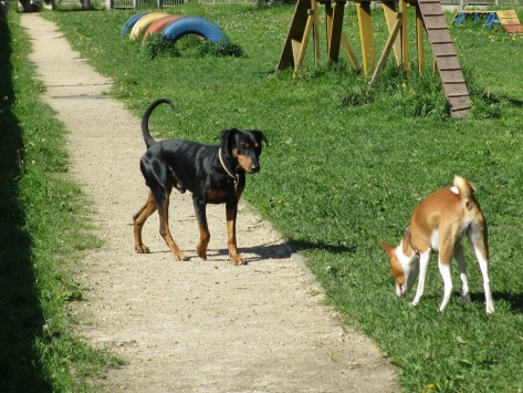 Dogs playing in the playground